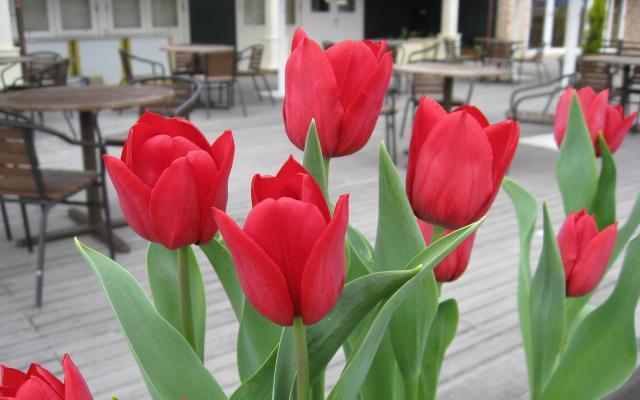 Цветы живые - фото 0002