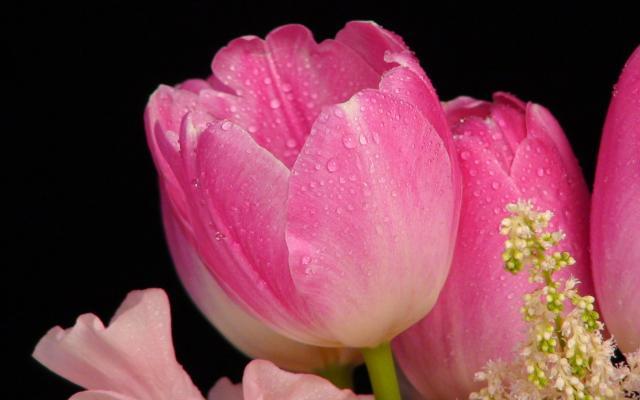 Цветы живые - фото 0003
