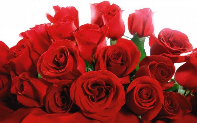 Цветы живые - фото 0004