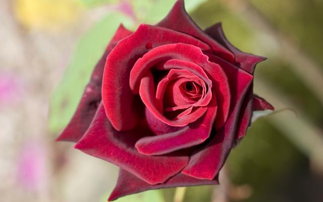 Цветы живые - фото 0007