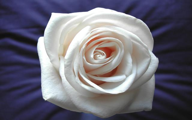Цветы живые - фото 0009