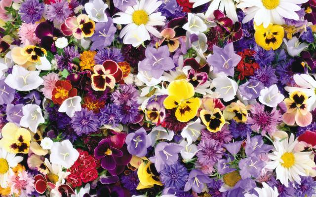 Цветы живые - фото 0051