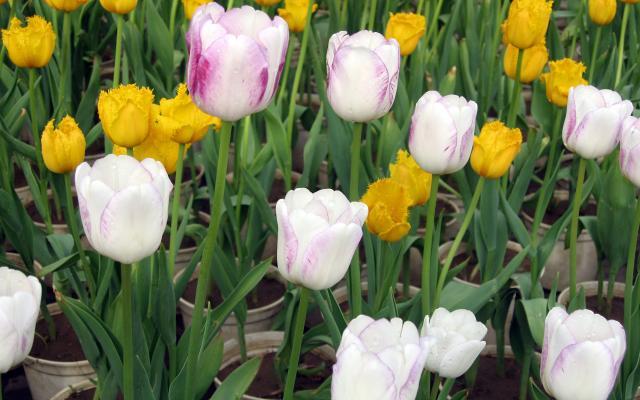 Цветы живые - фото 0081