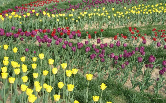Цветы живые - фото 0082