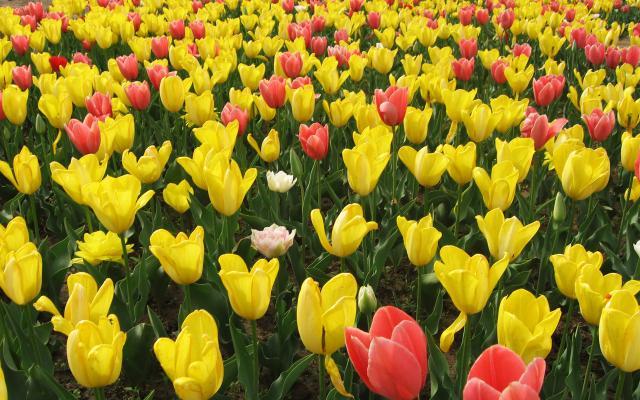 Цветы живые - фото 0085