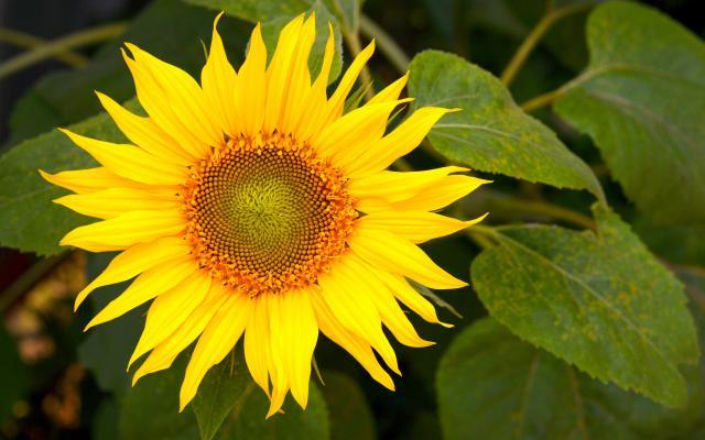 Цветы живые - фото 0090