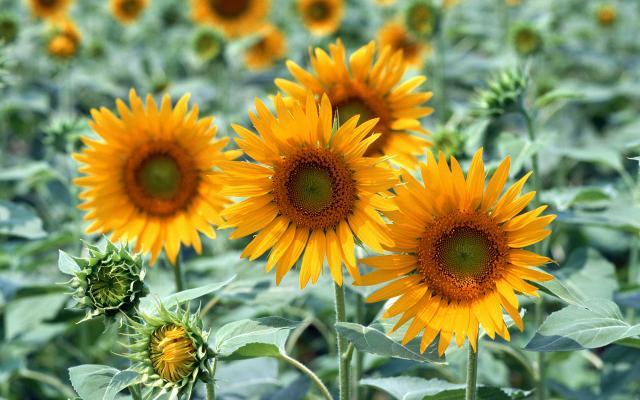 Цветы живые - фото 0099