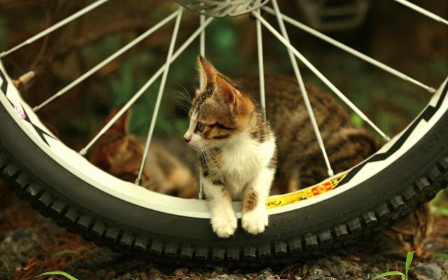 Кошки и котята - фото 0250