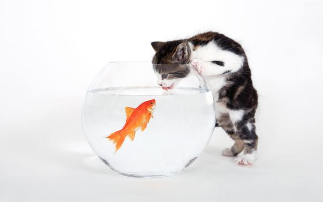 Кошки и котята - фото 0251