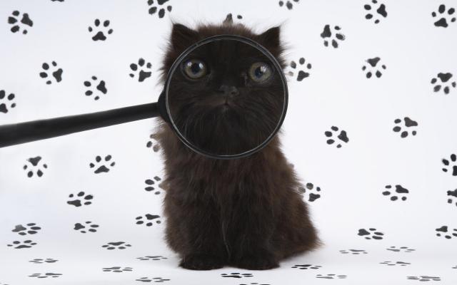 Кошки и котята - фото 0253