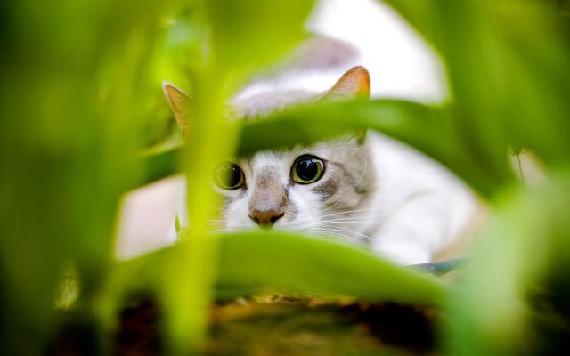 Кошки и котята - фото 0262
