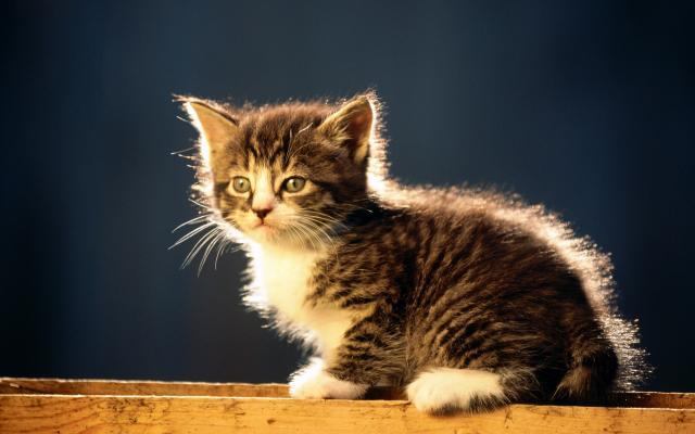 Кошки и котята - фото 0299