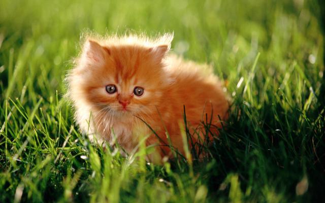 Кошки и котята - фото 0311