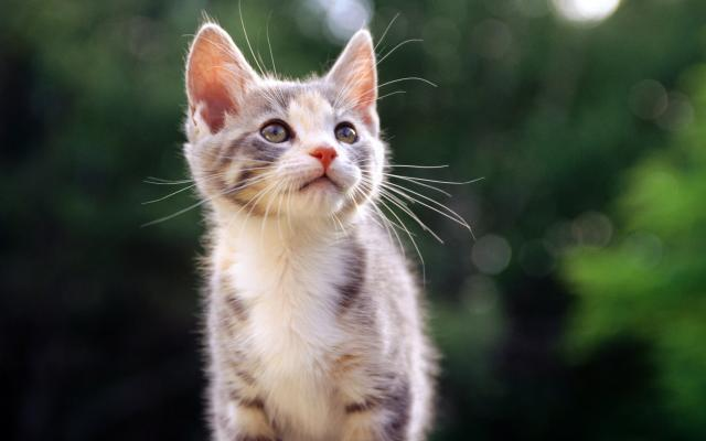 Кошки и котята - фото 0312