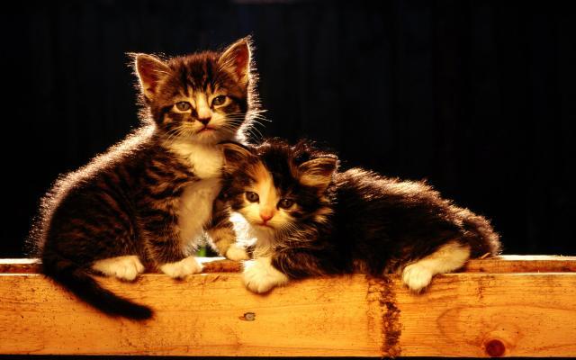 Кошки и котята - фото 0314