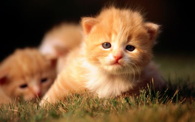 Кошки и котята - фото 0315