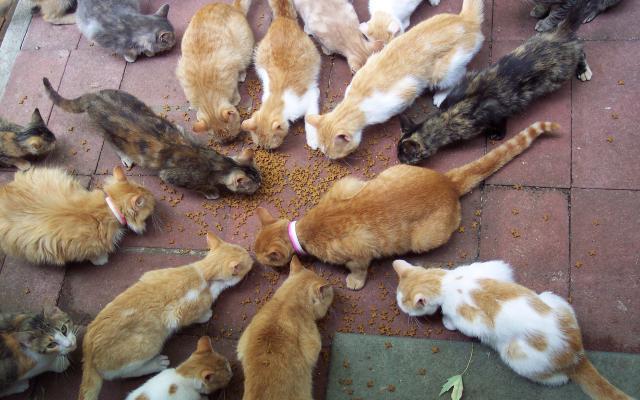 Кошки и котята - фото 0317