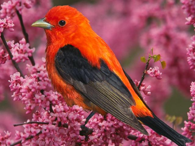 Птицы - фото 0334