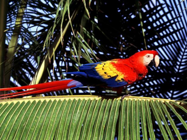 Птицы - фото 0379