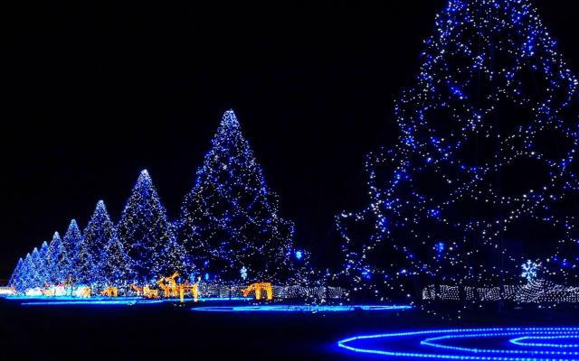 Новый год 2015 - фото 0810